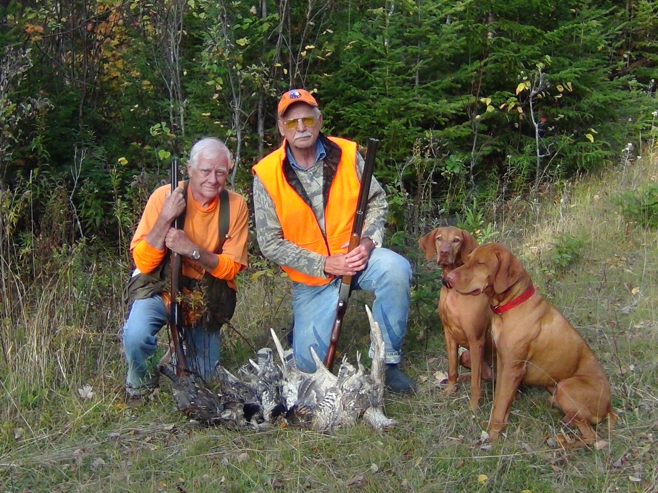 Semi – Guided Grouse Hunts in Maine