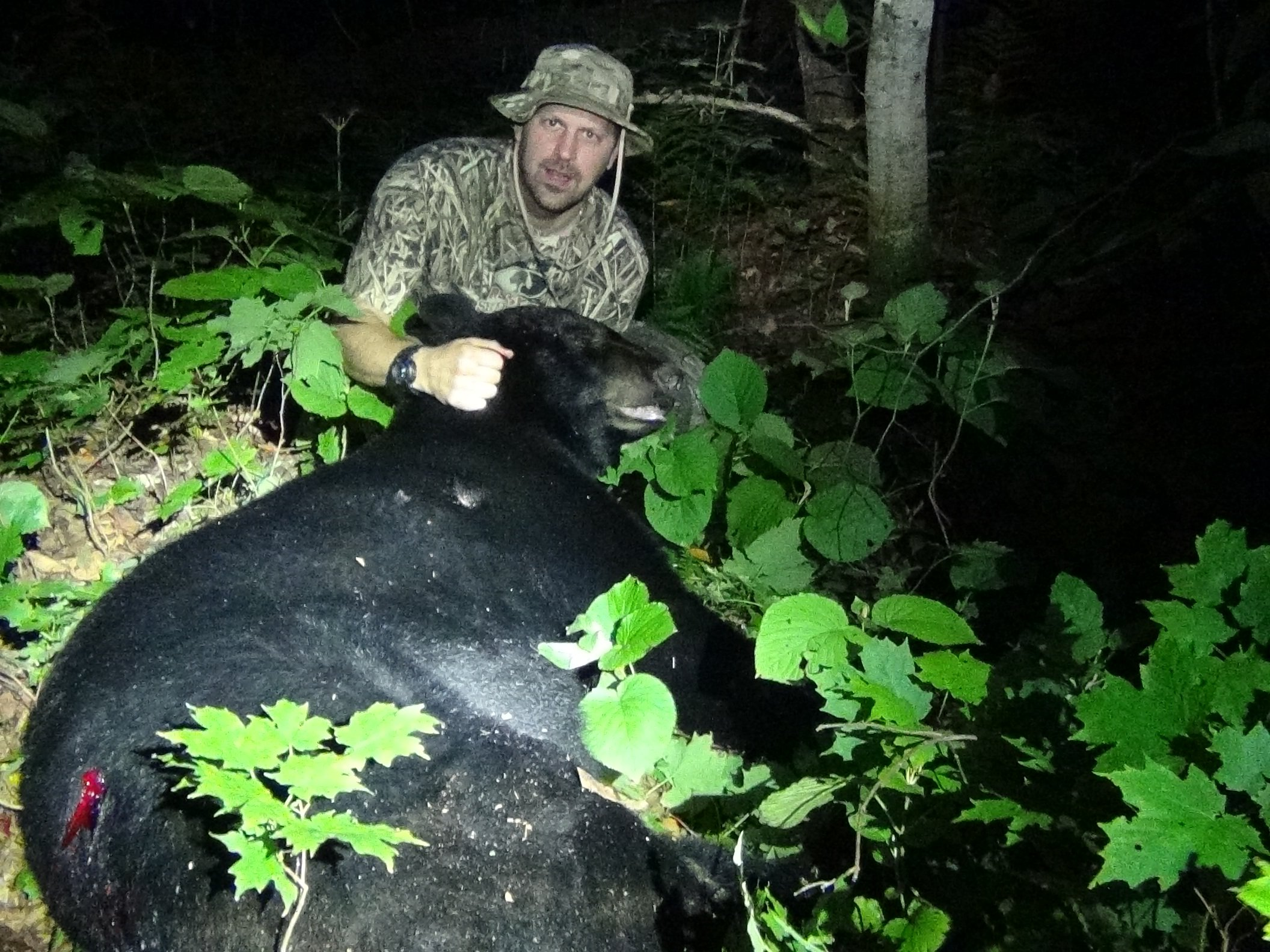 Maine Bear Hunt - Rifle 2014 - 370 lbs